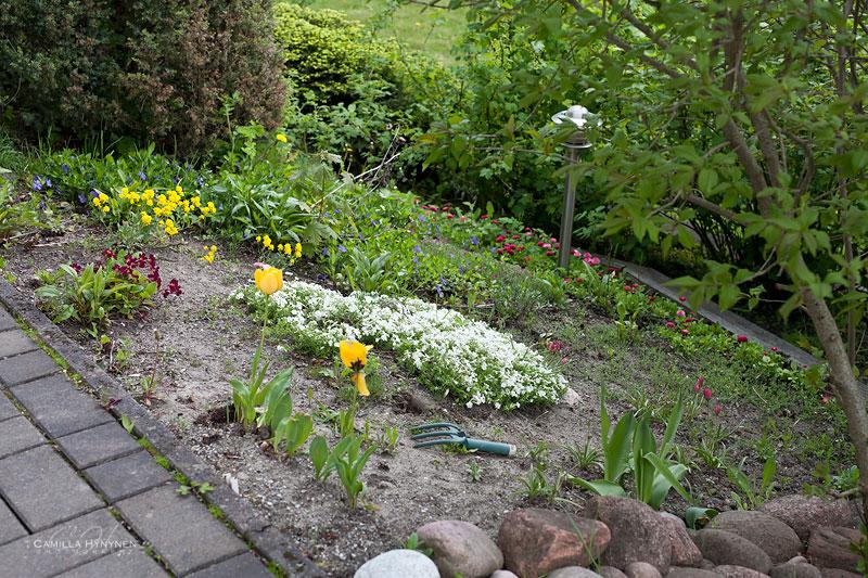 Trädgård-före--bilder-003