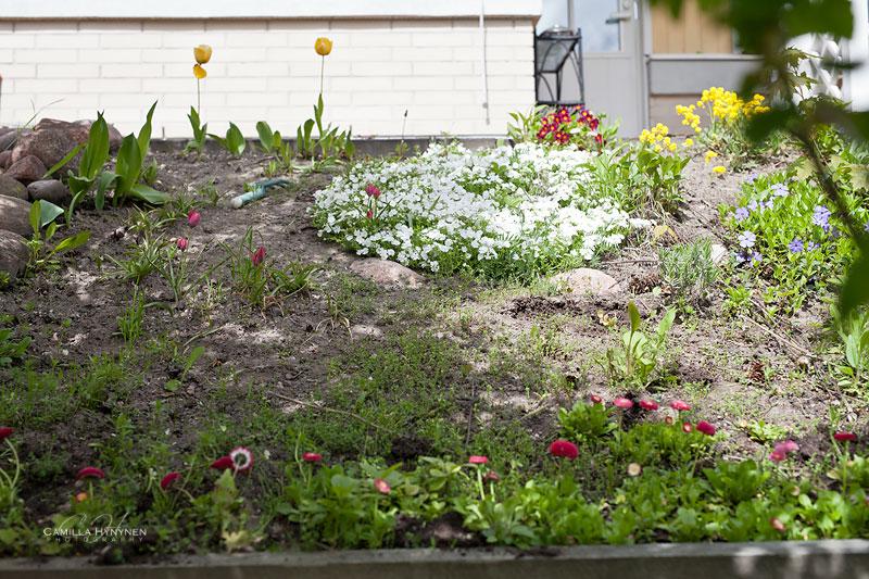 Trädgård-före--bilder-008