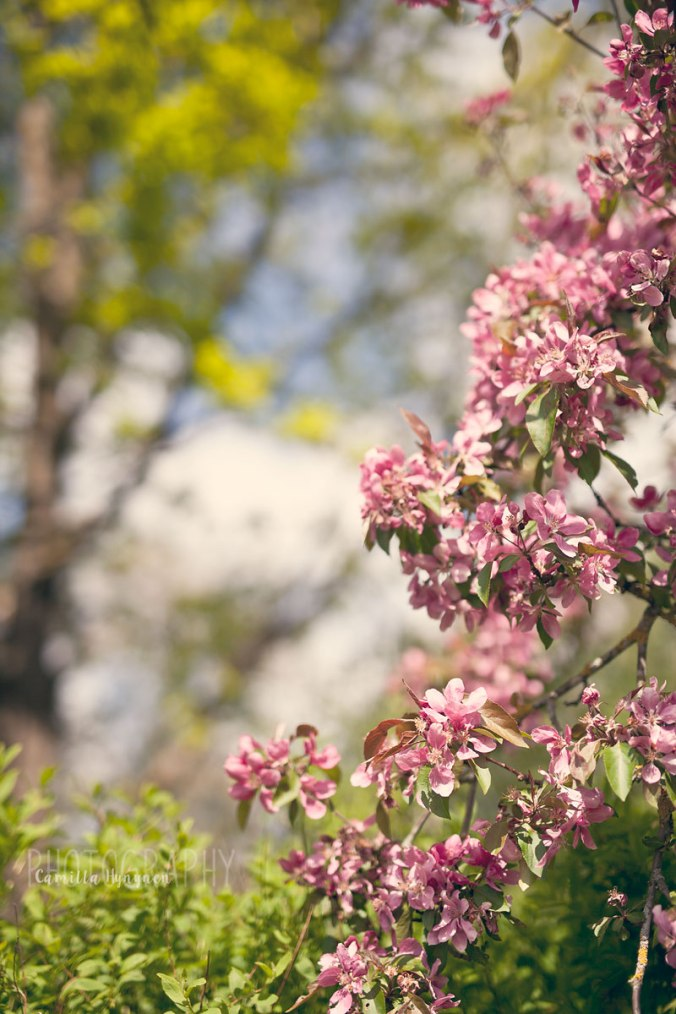 Blommor-o-annat-060