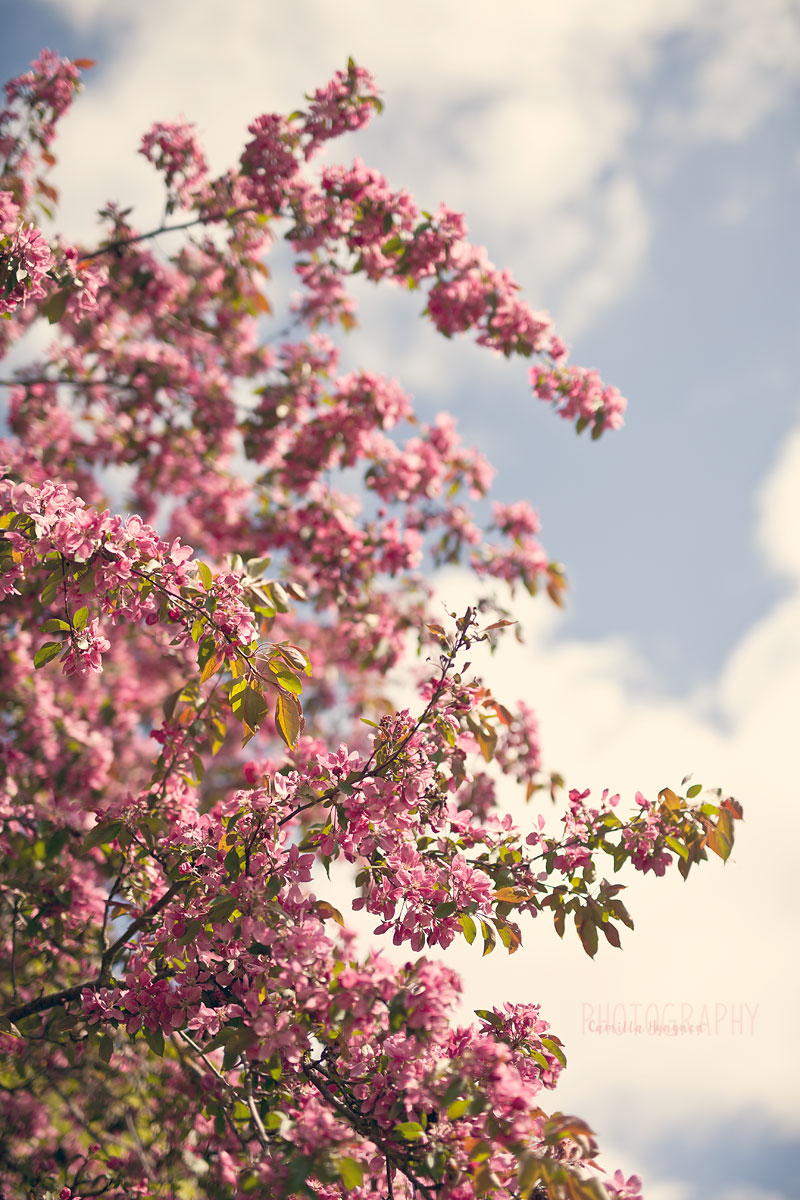 Blommor-o-annat-062