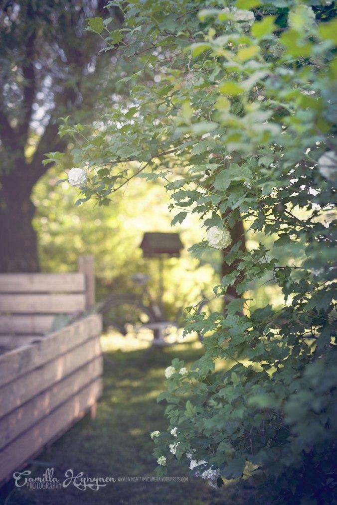 trädgård-019