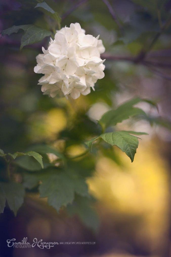 trädgård-023