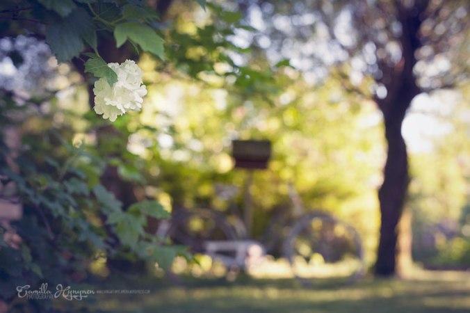 trädgård-025