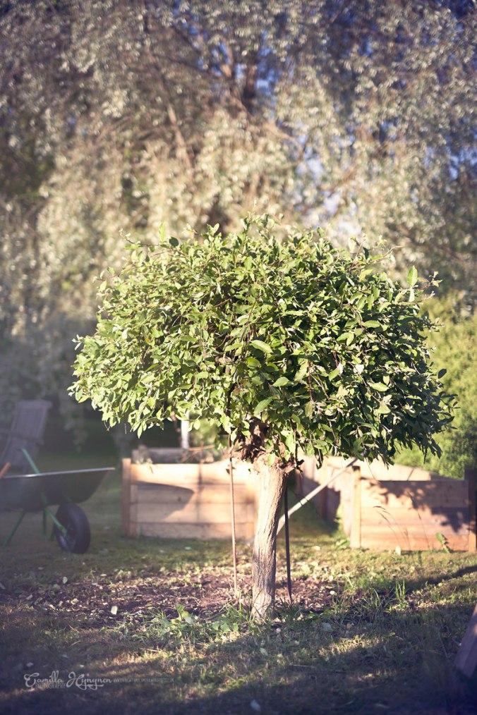 trädgård-033