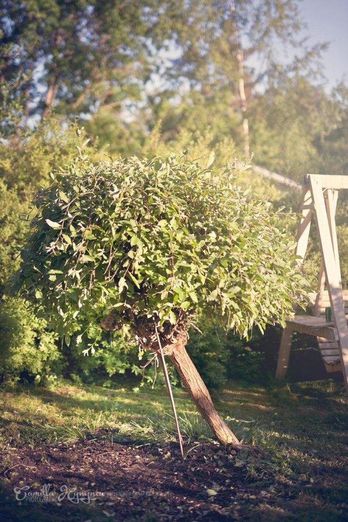trädgård-034