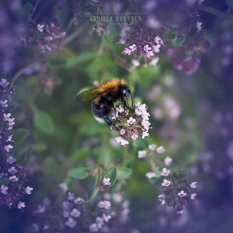 Bumble-bee-010-2-blogg