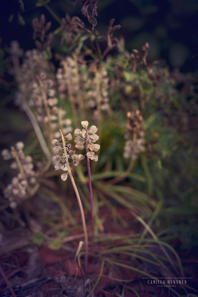 växt-blogg