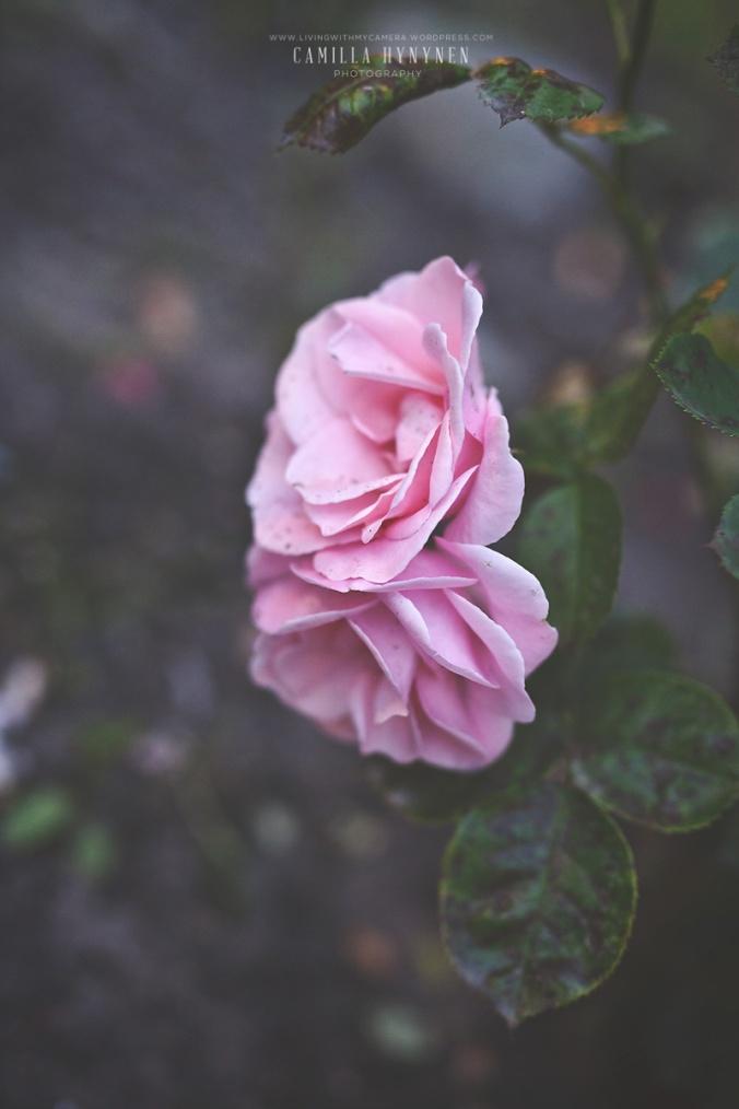 ett-veckoslut-i-bilder-052