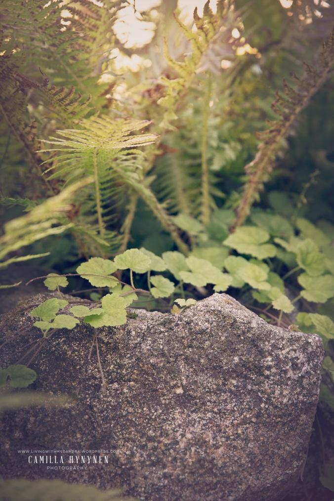 Sandras-trädgård-del-I-075