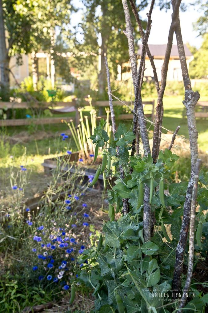 Sandras-trädgård-del-I-390