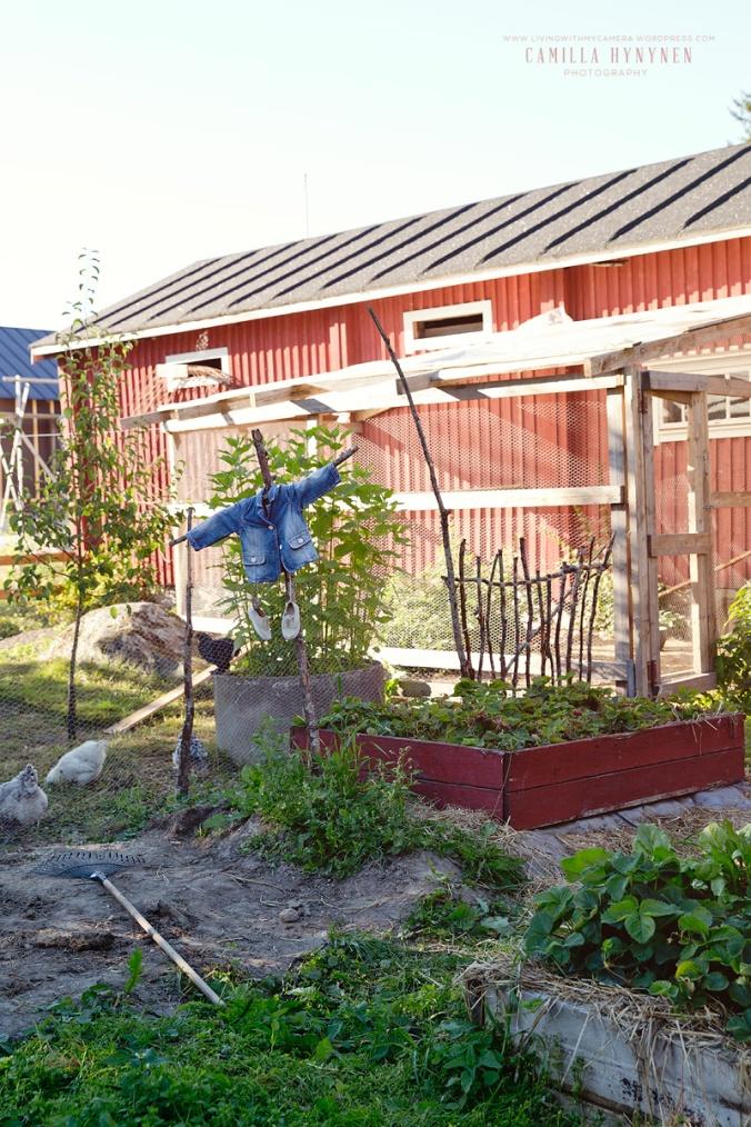 Sandras-trädgård-del-I-530