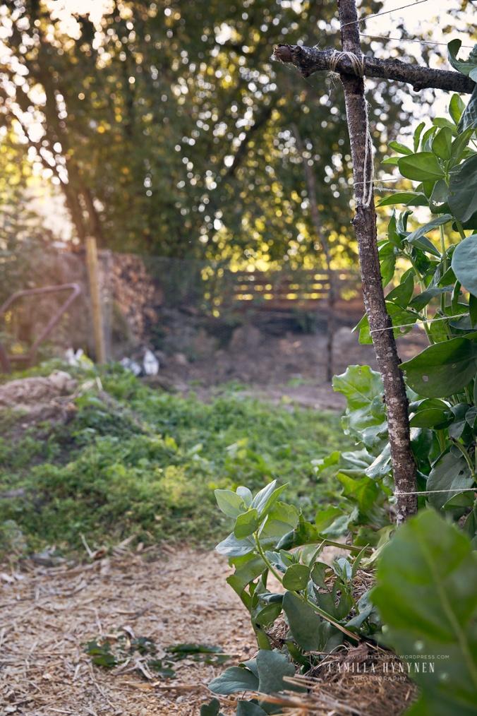 Sandras-trädgård-del-II-150