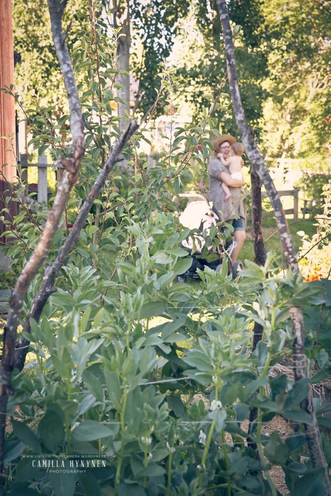 Sandras-trädgård-del-II-177