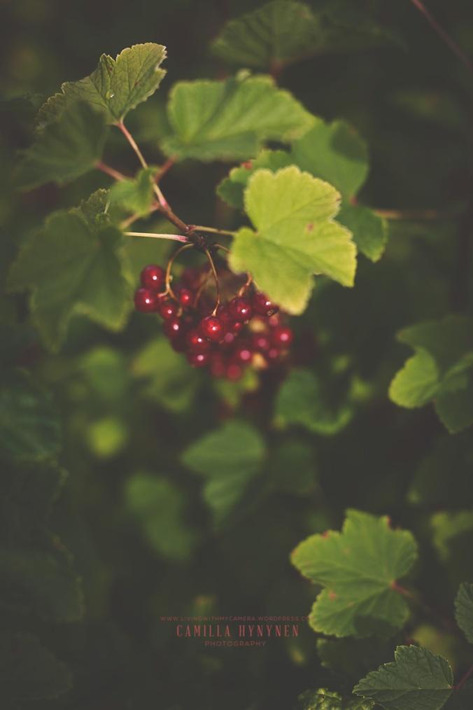 Tackorkl-bär-sommaren-2015-minneskort-B-052