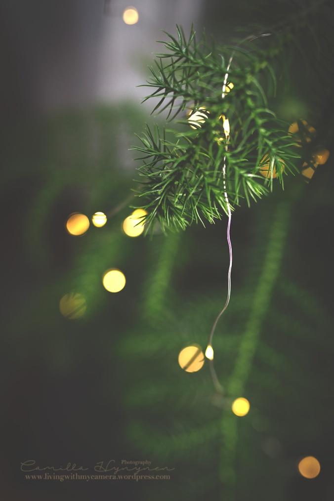 Julkalendersbilder-004