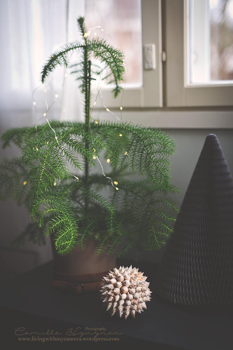 Julkalendersbilder-007