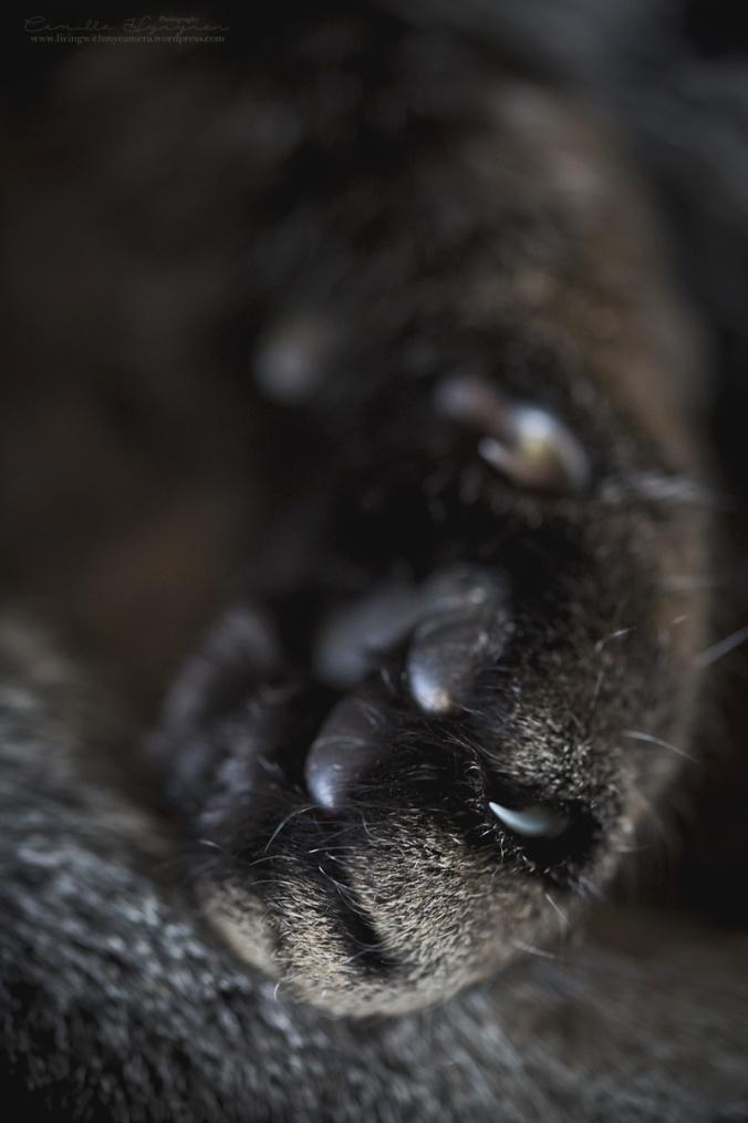 Katt-010