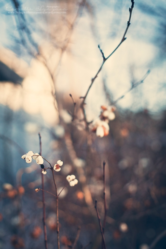 Bloggbilder-4-jan-2015-026