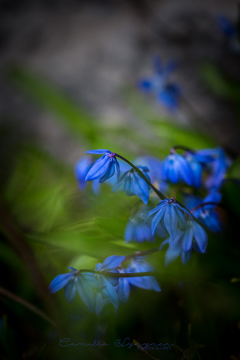 blomma-2-blogg