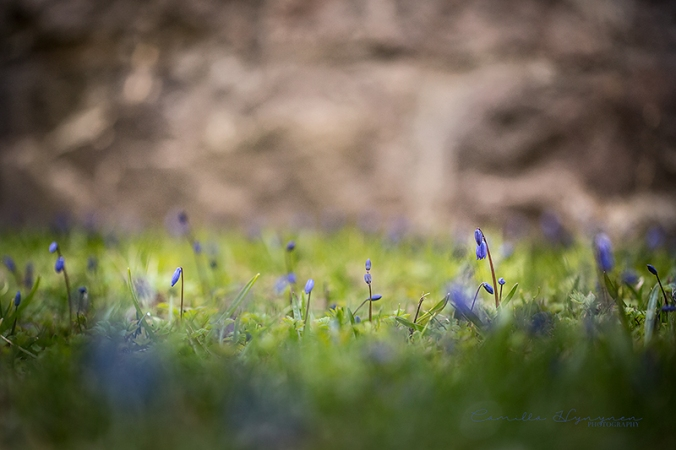 blomma-3-blogg