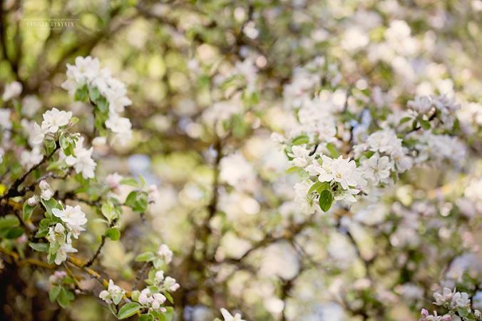 äppelträd-4