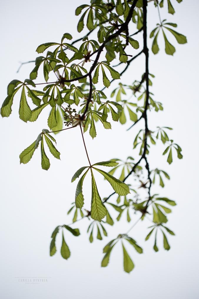 grönska-4