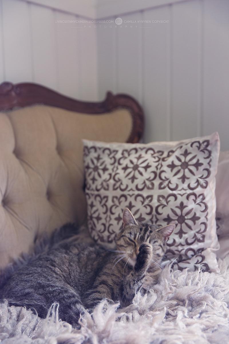 Matsals-soffa-012
