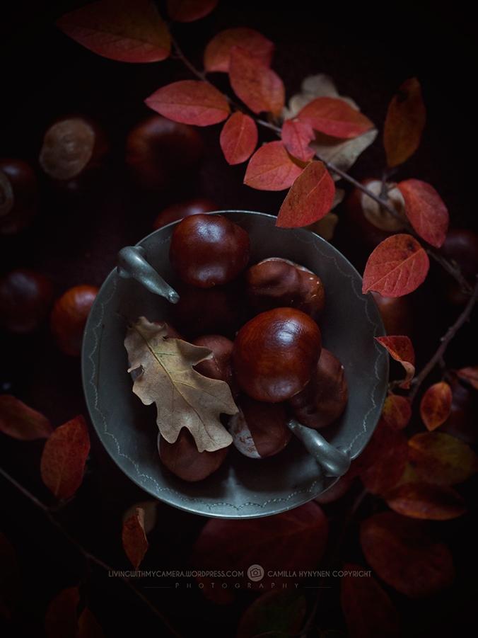 autumnstills-024