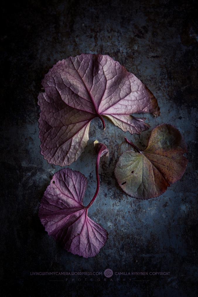 autumnstills-059