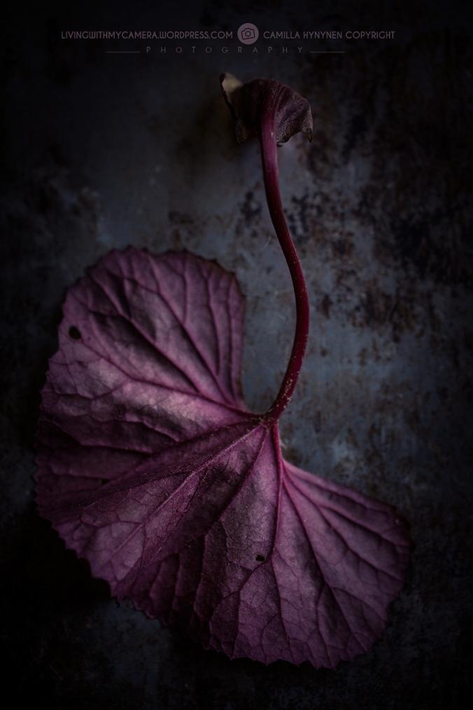 autumnstills-062