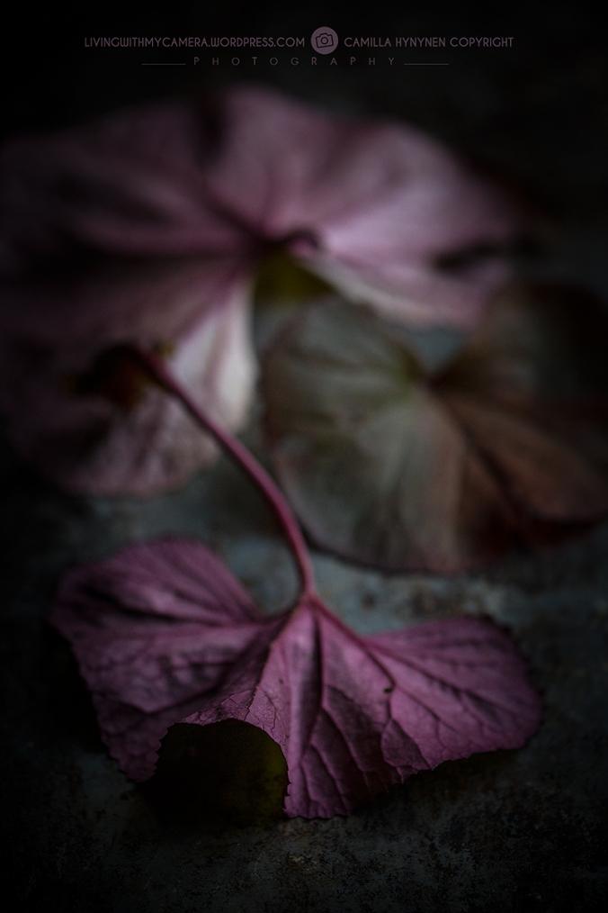 autumnstills-064