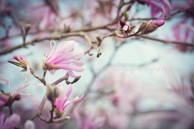 Magnolia-160