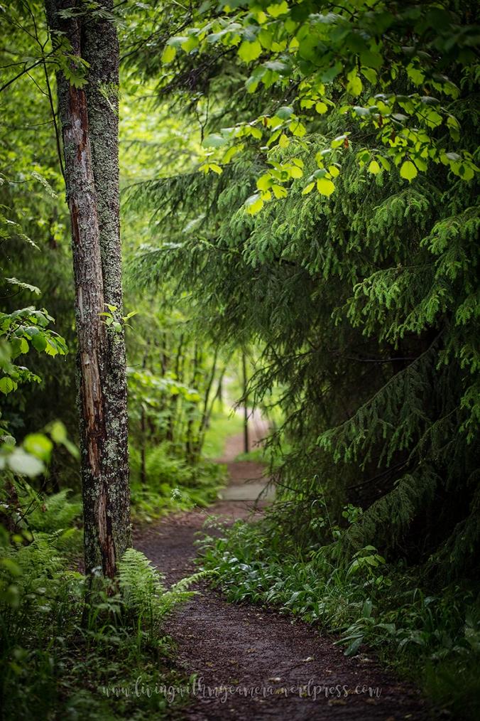 Runsala-efter-regnet-12.6-10