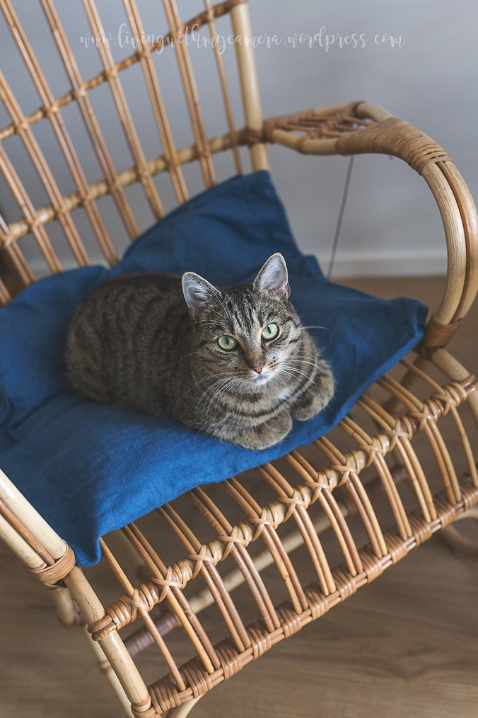 katt-1