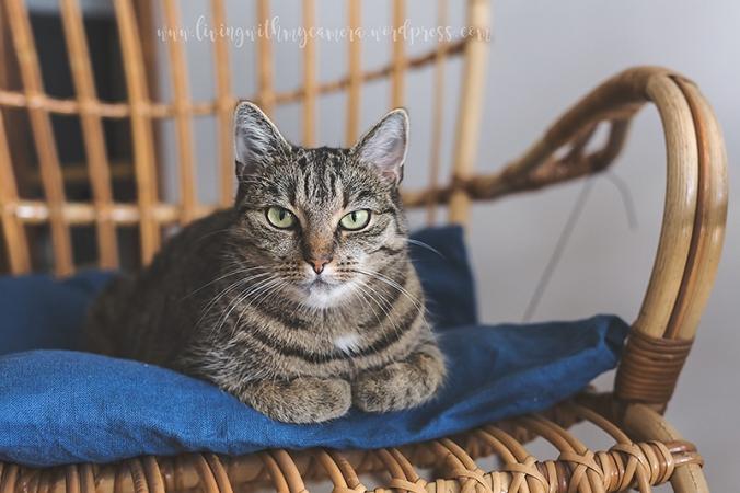 katt-4