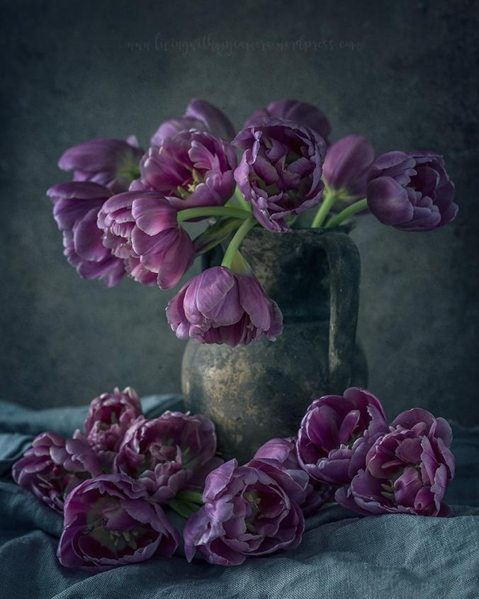 Tulips-II-031-lilah-blogg