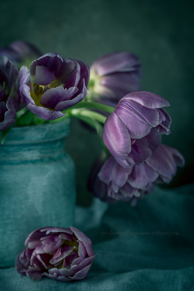 Tulips-II-069-blogg