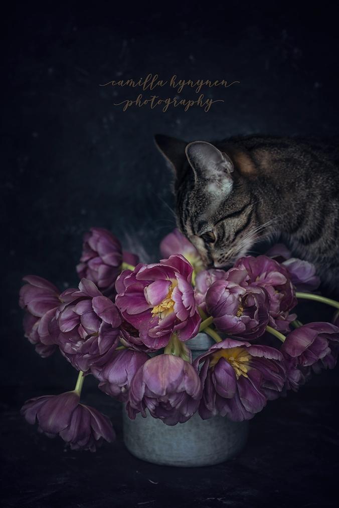 Tulips-III-028-WEBB