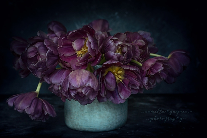 Tulips-III-064-webb