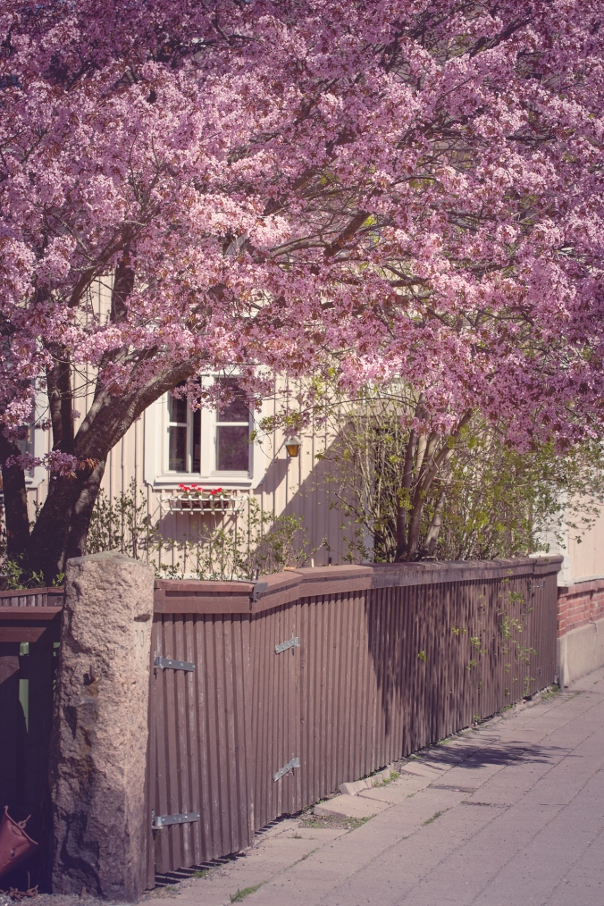 Cherry-blossom-turku-2018-102-FB