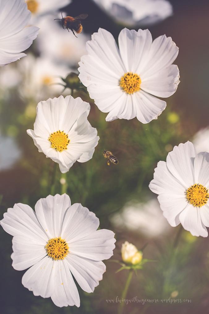 trädgård-2-blogg